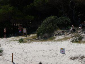 Gente ocupando espacios en regeneración en Cala Macarelleta