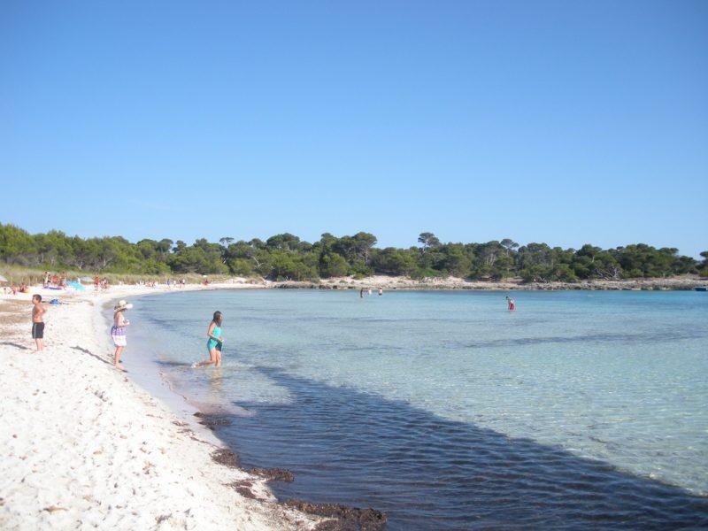 Posidonia oceanica en Son Saura (licencia CC por hugos007)