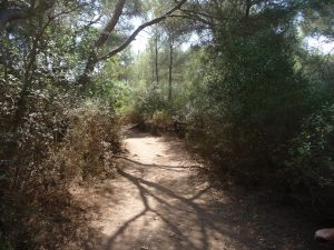Camí de Cavalls de Galdana a Santo Tomás